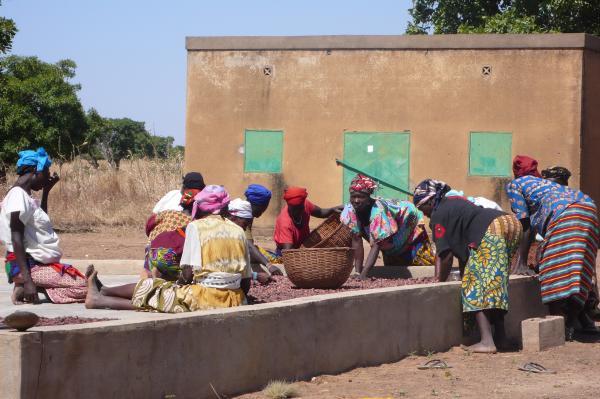 Cernita delle mandorle di karité a Nahartenga